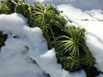 H280120野島農園に雪 (4)