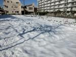 H280120野島農園に雪 (8)