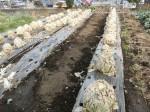 H2802061農園野菜 (1)