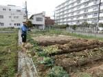 H2802061農園野菜 (2)