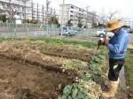 H2802061農園野菜 (3)