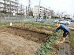 H2802061農園野菜 (4)