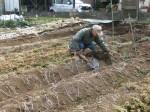 H280213農園収穫 (11)
