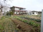 H280213農園収穫 (5)