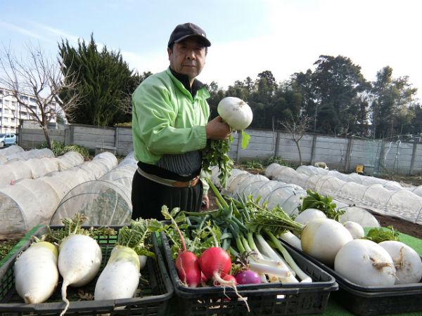 H280214農園収穫カブ (1)