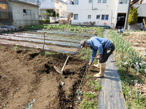 H280227農園トウモロコシ種まき (1)