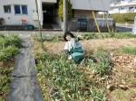 H280227農園トウモロコシ種まき (2)