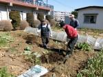 H280302農園ジャガイモ畝づくり (12)