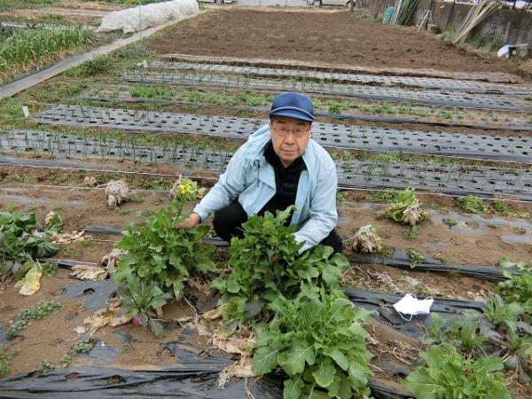 H280306農園菜の花 (1)