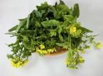 H280306農園菜の花 (10)