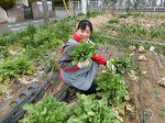 H280306農園菜の花 (8)