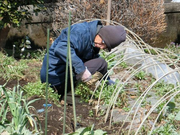 H280315野島農園 (9)