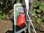 H280326農園菜の花 (10)