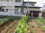 H280326農園菜の花 (2)