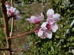 H280326農園菜の花 (22)