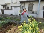 H280326農園菜の花 (3)