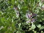 H280326農園菜の花 (16)