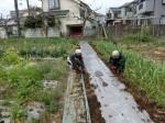 H280401農園トウモロコシ種まき (3)