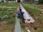 H280401農園トウモロコシ種まき (5)