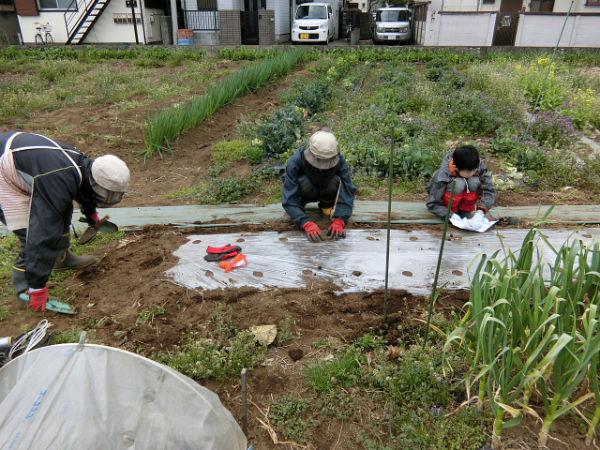 H280401農園トウモロコシ種まき (1)