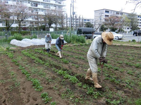 H280413農園ジャガイモ土かけ (1)