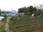 H280413農園ジャガイモ土かけ (2)
