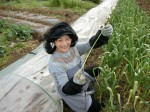 H280415野島農園ニンニク芽 (4)