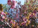 H280415門前氷川神社春季大祭 (15)