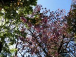 H280415門前氷川神社春季大祭 (19)