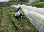 H280415野島農園ニンニク芽 (3)