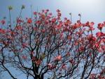H280415門前氷川神社春季大祭 (13)