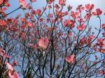 H280415門前氷川神社春季大祭 (14)