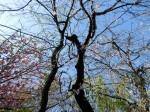 H280415門前氷川神社春季大祭 (18)