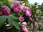 H280415門前氷川神社春季大祭 (20)