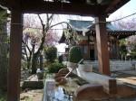 H280415門前氷川神社春季大祭 (3)