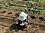 H280418野島農園 (14)