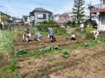 H280418野島農園 (2)