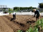 H280501サツマイモ畝つくり (10)