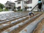 H280501サツマイモ畝つくり (13)