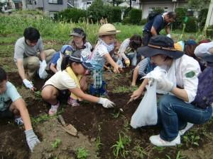 H270720ジャガイモ掘り (3)