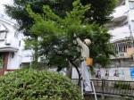 H280723稲荷神社・厳島神社清掃 (11)