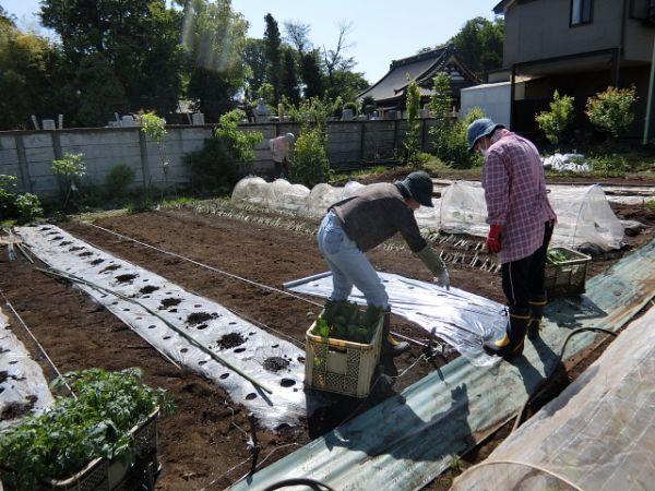 H280505夏野菜植え付け (1)