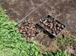 H280505夏野菜植え付け (12)