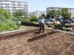 H280505夏野菜植え付け (13)