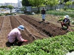 H280505夏野菜植え付け (16)