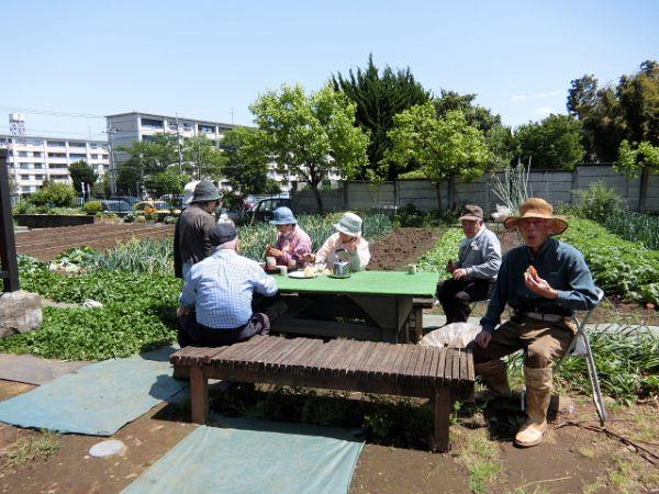 H280505夏野菜植え付け (19)