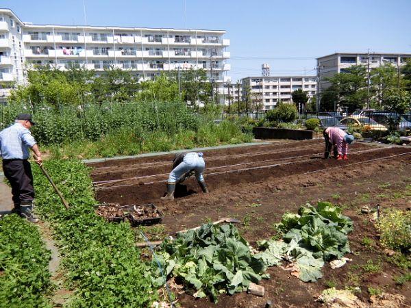 H280505夏野菜植え付け (2)