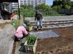 H280505夏野菜植え付け (5)