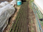 H280505夏野菜植え付け (8)