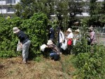 H280819いやし収穫体験 (13)